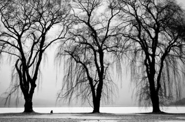3 tall trees