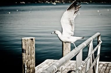 Bird on a rail